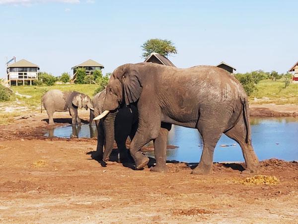 Reinhard-Baer-Botswana-Elefanten-600px-1