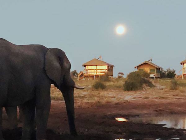 Reinhard-Baer-Botswana-Elefanten-600px-2